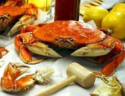 Dungeness Crab feed Sonoma