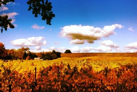 Fall in the Sonoma Wine country