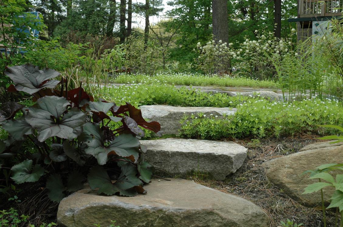 Winchester massachusetts landscape design moodscapes llc for Woodland landscape design