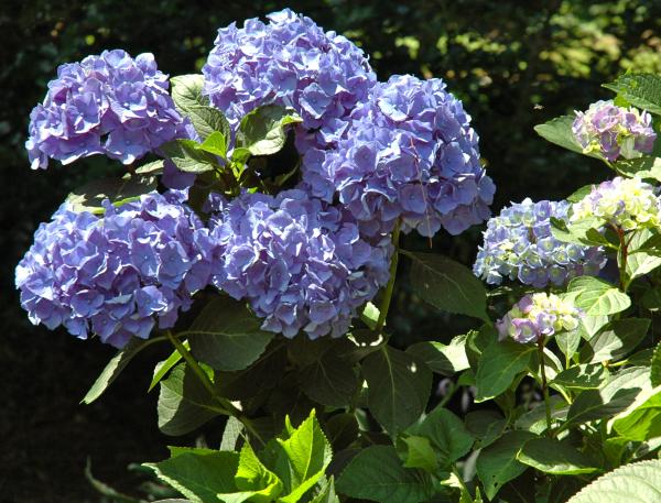 Perennial flowers that bloom all season image collections flower perennial flowers that bloom all season image collections flower perennial flowers that bloom all season image mightylinksfo