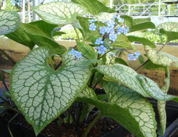 What are the best plants for shade gardens mightylinksfo Gallery