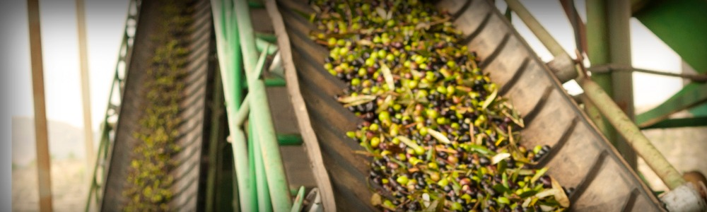 Bulk Olive Oil Manufacturing Blog