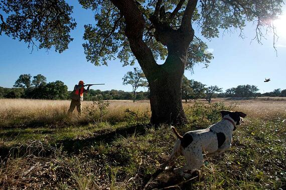 Joshua-Creek-Ranch_upland-hunter