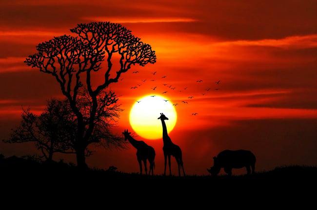 Informe Ipbes: cinco alertas sobre la biodiversidad del planeta