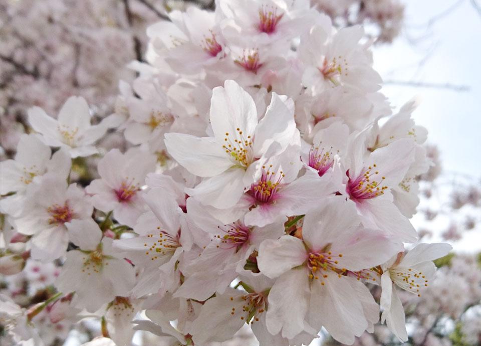 新しい季節を迎えるあなたに 春の新生活応援プラン