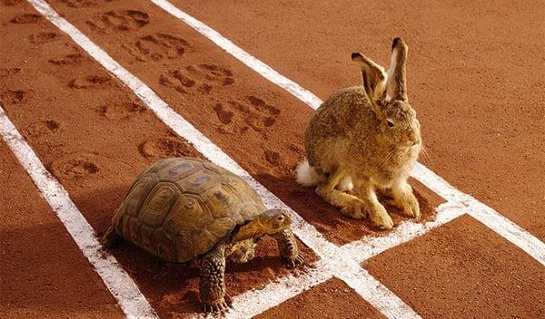 Blog_PlanAB_wersm-turtle-hare-fable-social-media