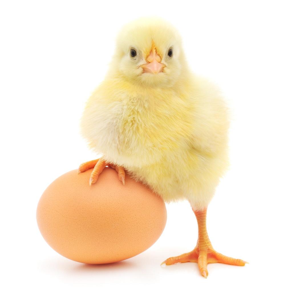 ChickenEgg-1024x1024.jpg