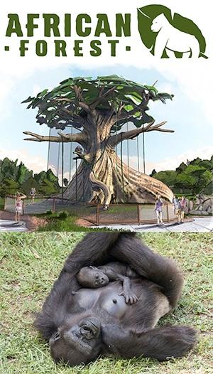 Zoo_Ape-Exhibit-300x526
