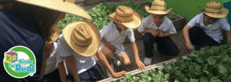 Beneficios de cuidar un huerto en la etapa preescolar