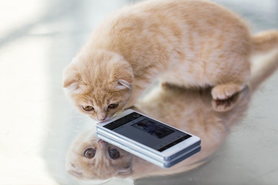 Curiosity called the Cat.