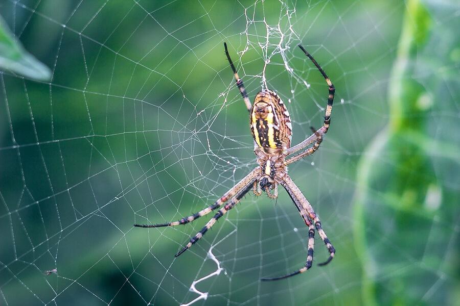 Debt settlement spiders weave webs of grief.