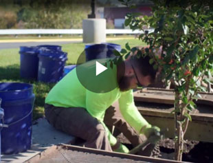 How to Maintain a Filterra Biofiltration System