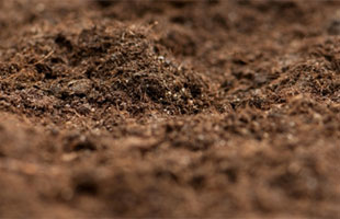 Everything* You Wanted to Know About Soils, But Were Afraid to Ask