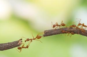 Content-Marketing-Arbeitsteilung-wie-im-Ameisenstaat