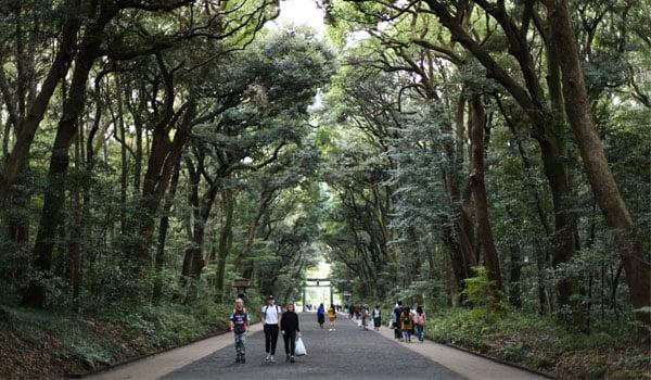 meiji-shrine-in-tokyo-japan