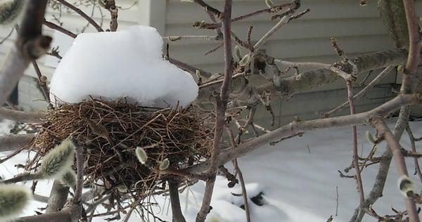 A Snowbird's Appreciation of Kendal