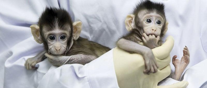 La polémica acerca de la clonación