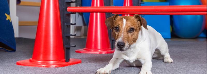 Fisioterapia para Pequeñas Especies, el alivio de tu mascota