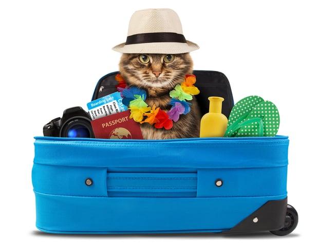 desventajas de viajar con tu mascota_uvm2018 a m