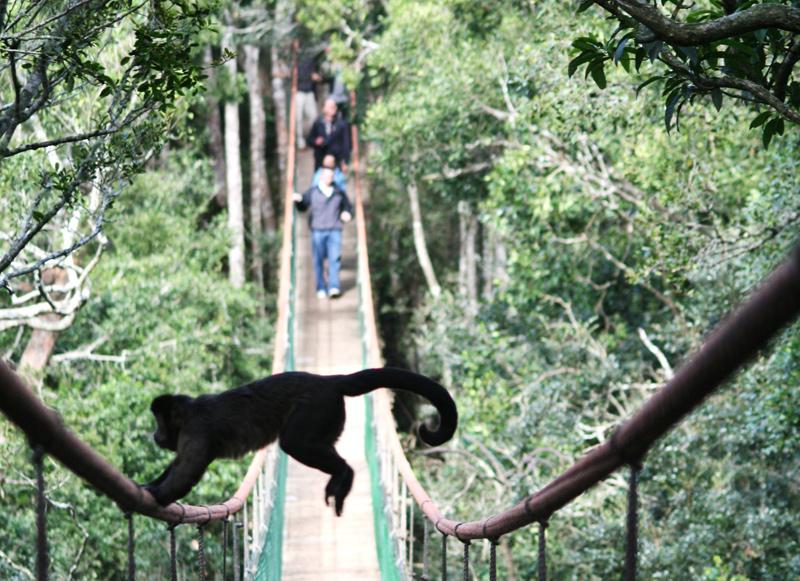 Monkey_Land