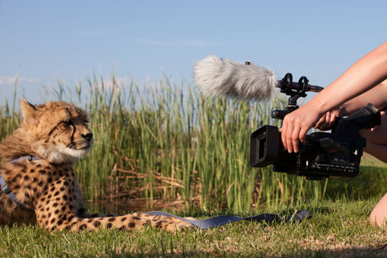 Wildlife filmmaking career