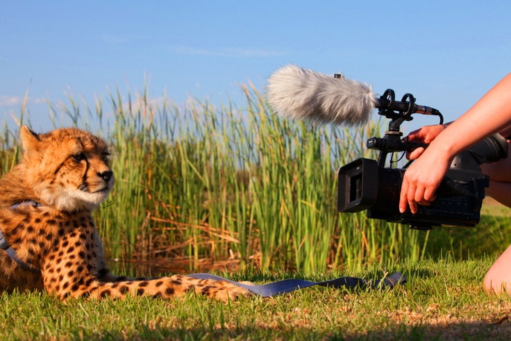 Documentary film making student films Cheetah