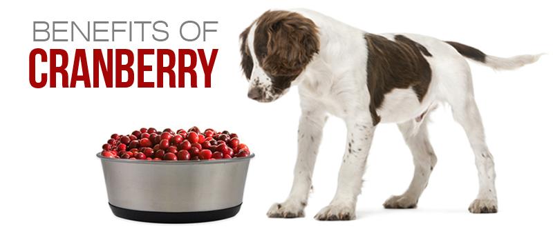 Ποια είναι η χρησιμότητα των Cranberrys;