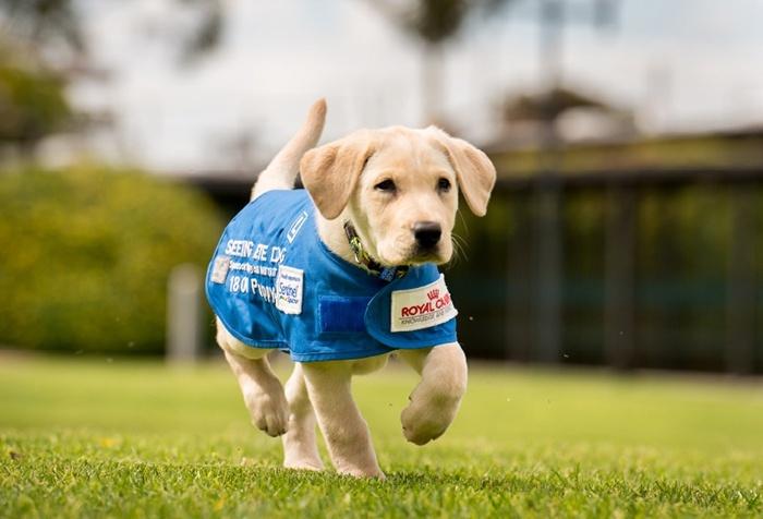 chiens-guide-IDF