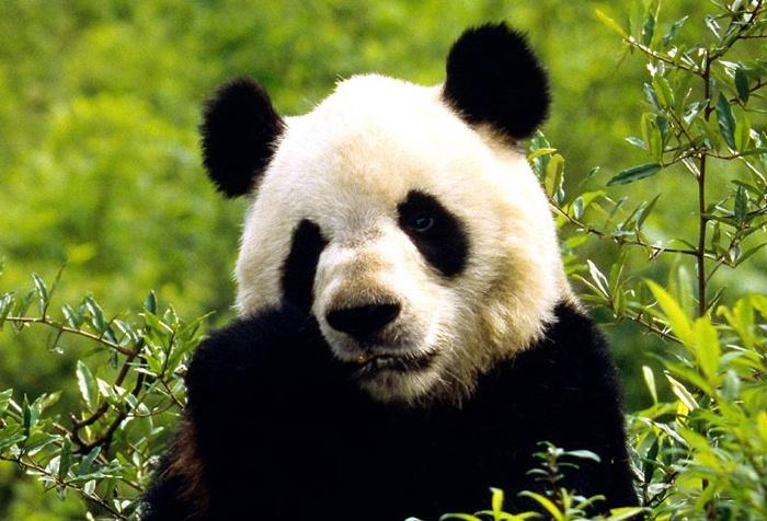 newsletter-avril-2018-panda