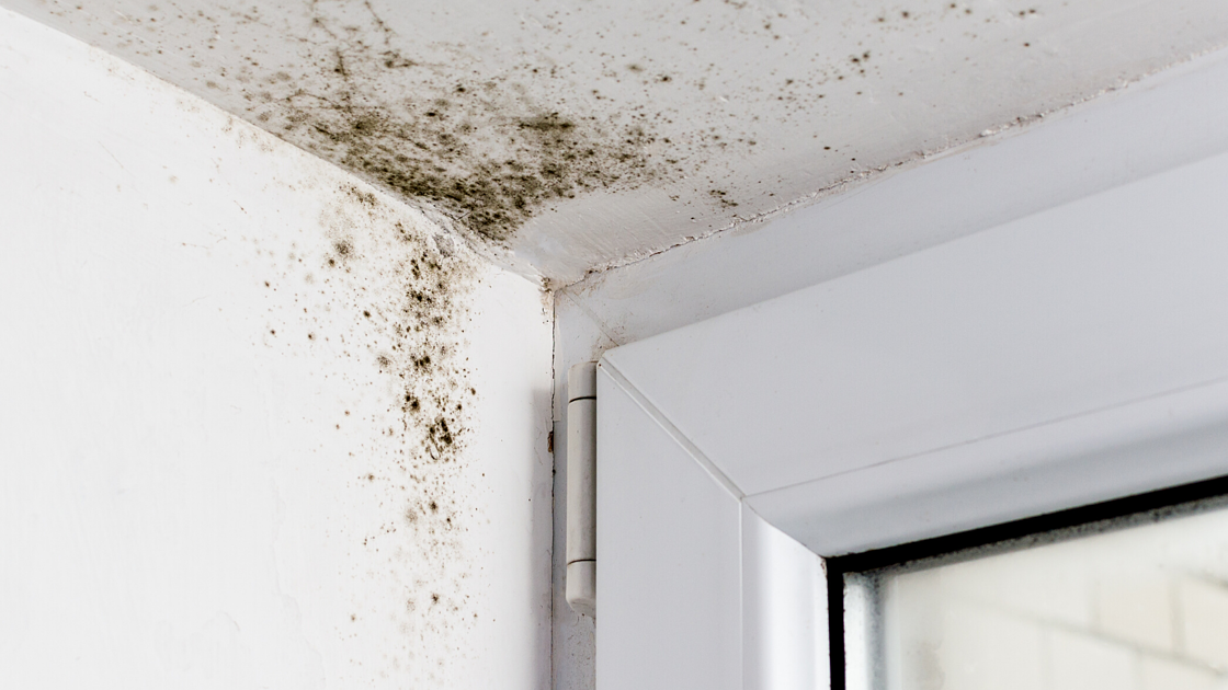 4 ways to prevent mold in your home