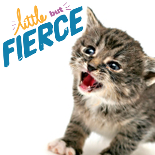 little but fierce