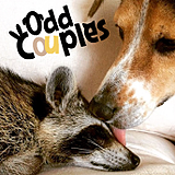 OddCouples.png