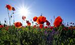 Fertilising our technology tall poppies