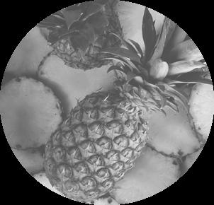 Refrigeración industrial para frutas