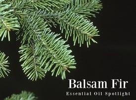 Balsam-Fir-Essential-Oil-Spotlight.jpg