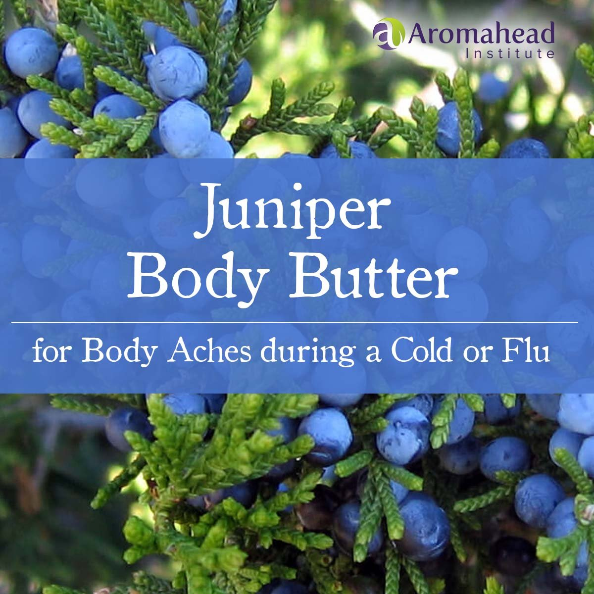 February-Blog-Feb 26-title-Juniper Body Butter-1200 x 1200