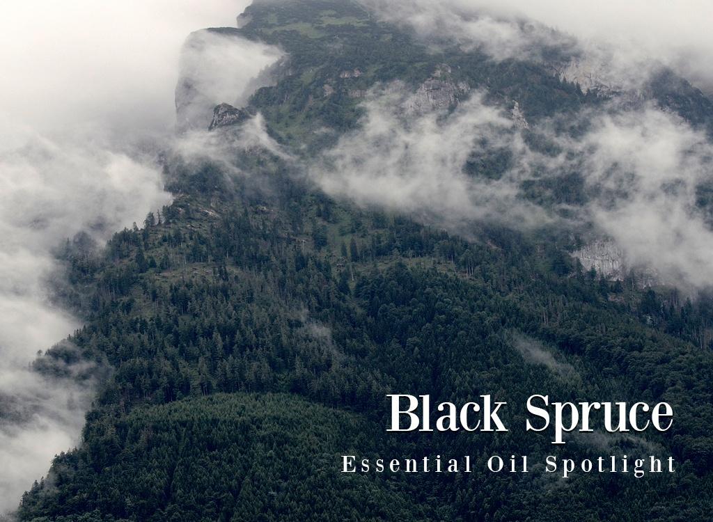 Black-Spruce-Essential-Oil-Spotlight.jpg