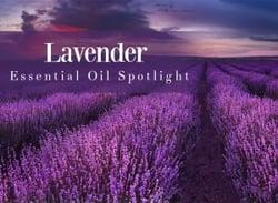 lavender-essential-oil-spotlight.jpg