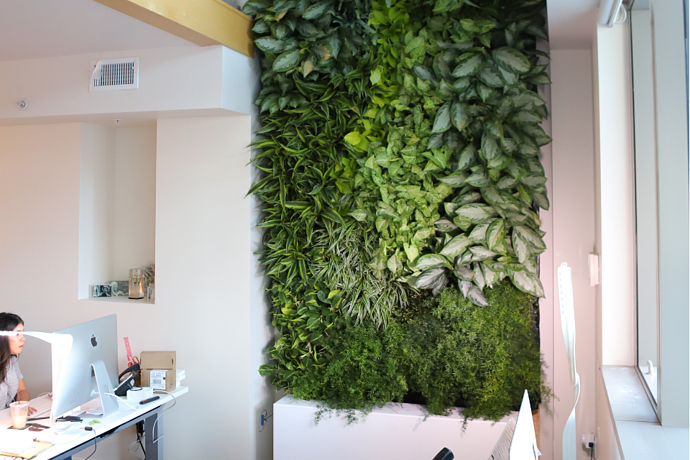 [CASE STUDY] A Living Greenwall Story