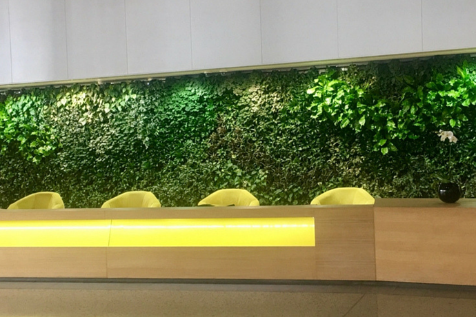 5 advantages of a vertical garden in a small office