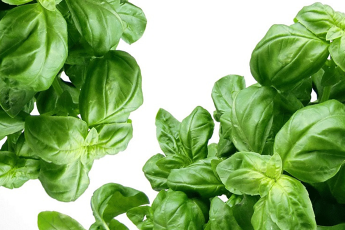 7 basil recipes to bookmark
