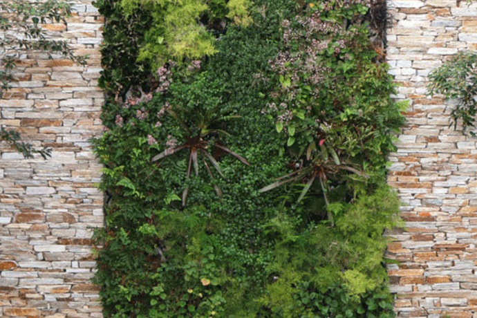 A green wall timeline: from start to finish
