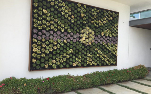 Planning your succulent living wall