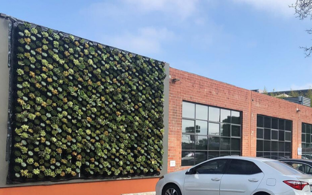 Case Study | Pacifica Succulent Wall