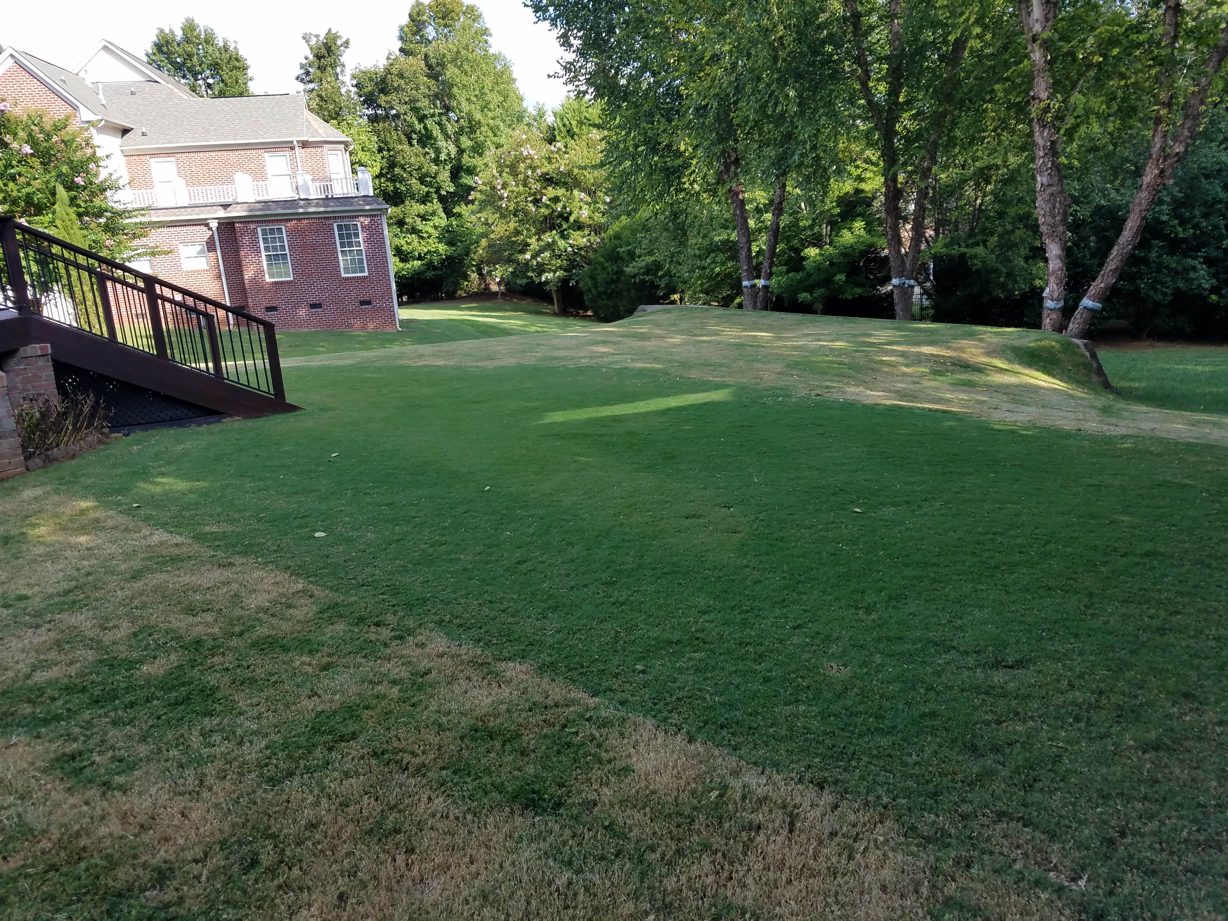 Frequent Mowing to Prevent Lawn Scalping - featured image