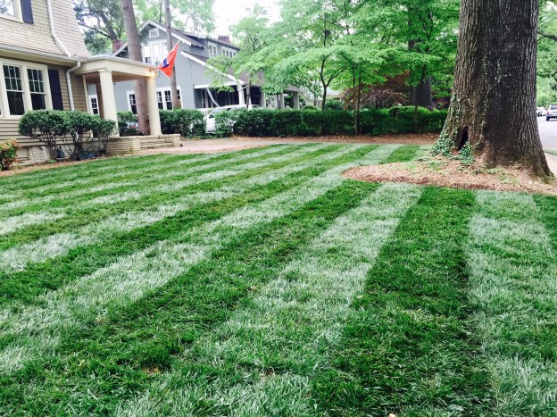 Apply Lawn Fungicide to Tall Fescue in Summer - featured image