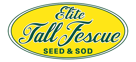 Elite Tall Fescue