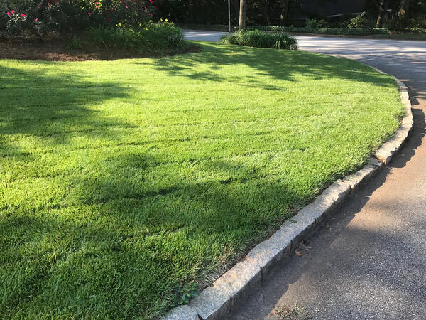 Curbside view of Zenith Zoysia lawn from seed