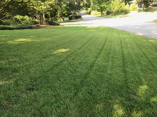 Zenith Zoysia lawn from seed
