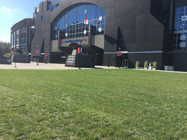 Elite Tall Fescue lawn at Bank of America Panthers Stadium